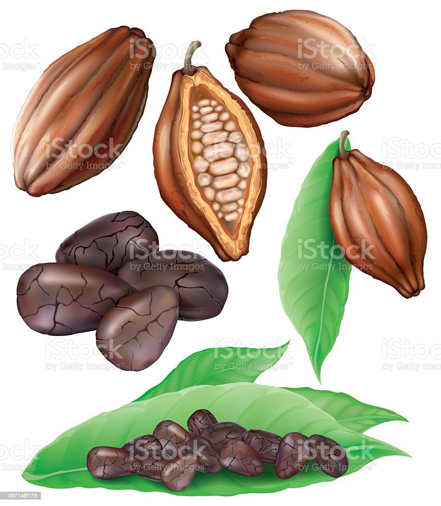 Cacao pods and grains vector art illustration