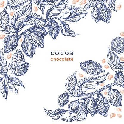 Cacao texture plant. Vector graphic bean. Bio food