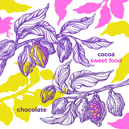 Cacao. Tropical template. Natural chocolate food