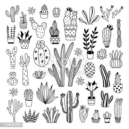 Cacti and succulents hand drawn vector illustrations on white background. Cute outline plants collection. Botanical black and white set