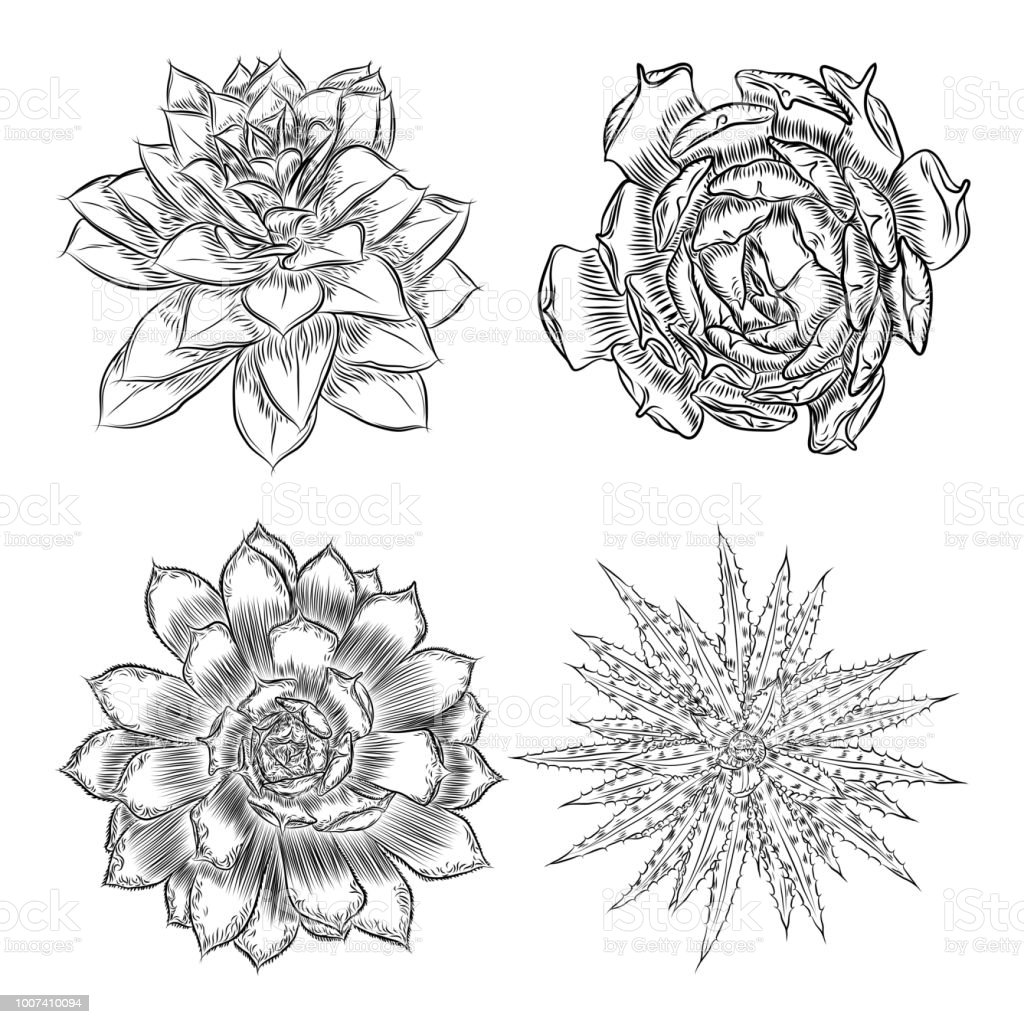 Cacti Flower Set Cactus And Succulents Collection Hand ...  Cactus Flower Outline