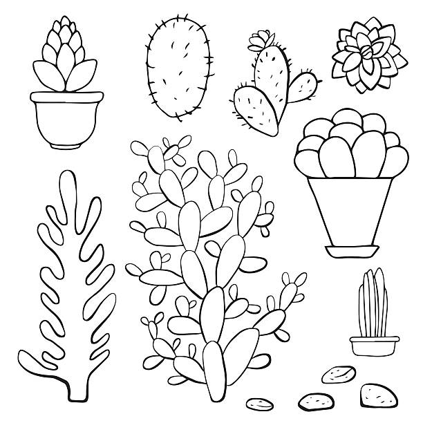 Royalty Free Prickly Pear Cactus Clip Art, Vector Images ...  Cactus Flower Outline
