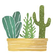Cacti watercolor, succulents, home flowers, houseplants in box isolated on white background - vector artwork