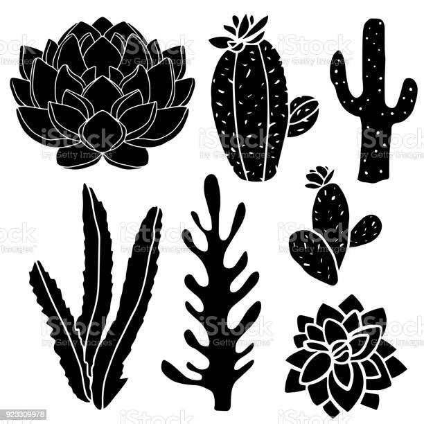 Cacti succulents potted plants vector id923309978?b=1&k=6&m=923309978&s=612x612&h=u2qjsls7dnq2yybje ymy cs2do rnckr2bvqeltljq=