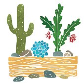 Cacti watercolor, succulents, home flowers, houseplants in wooden box, stones isolated on white background - vector artwork