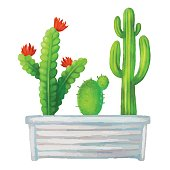 Cacti watercolor, succulents, home flowers, houseplants in box isolated on white background