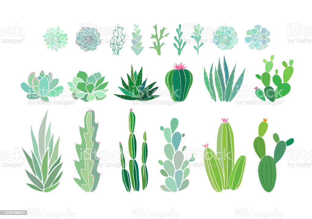 Cactus And Succulent Plants Isolated On White Vector Illustration With Evergreen Succulent Flowers Aesthetic Floral Clip Art Vector Eps 10 Illustration Stock Illustration Download Image Now Istock