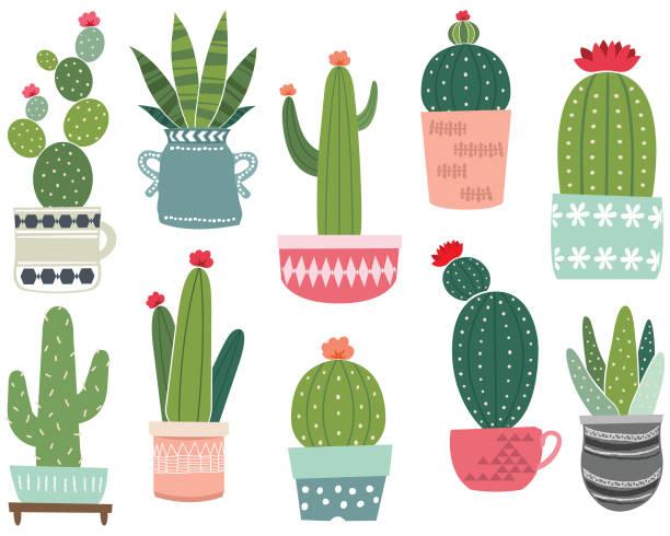 kaktus-sammlungen - glasblumen stock-grafiken, -clipart, -cartoons und -symbole