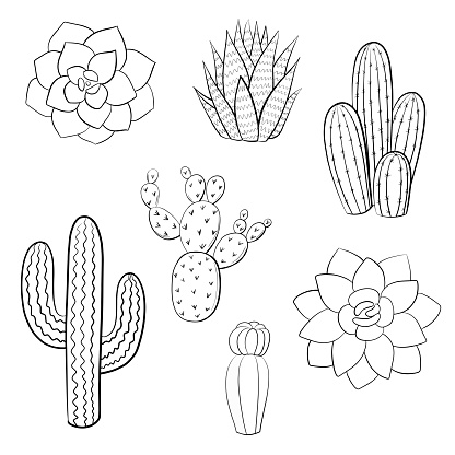 Cactus contour isolated on white background. Vector illustration