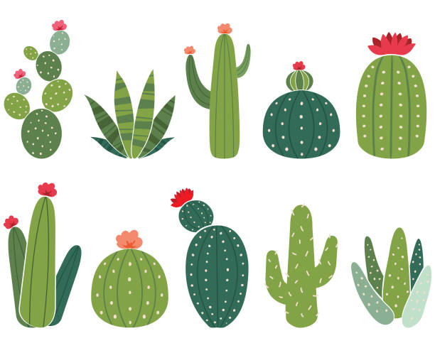 cactus elements set - desert stock illustrations