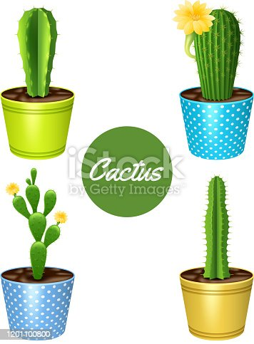 Cactus plants in flower pots decorative icons set isolated vector illustration