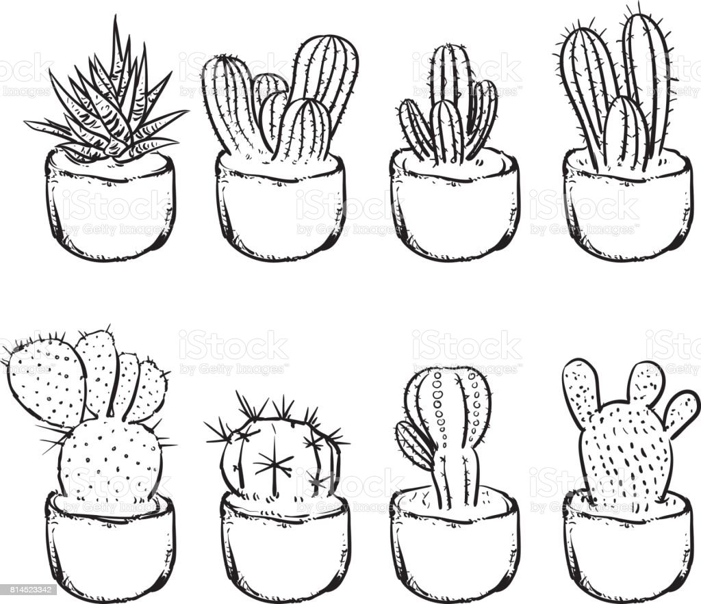 Cactus Isolated On A White Background Hand Draw Cactus In The Pots