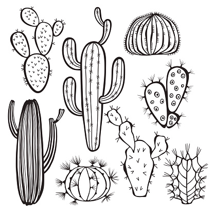 Cactus isolated on white background. Vector,  hand drawn set illustration.
