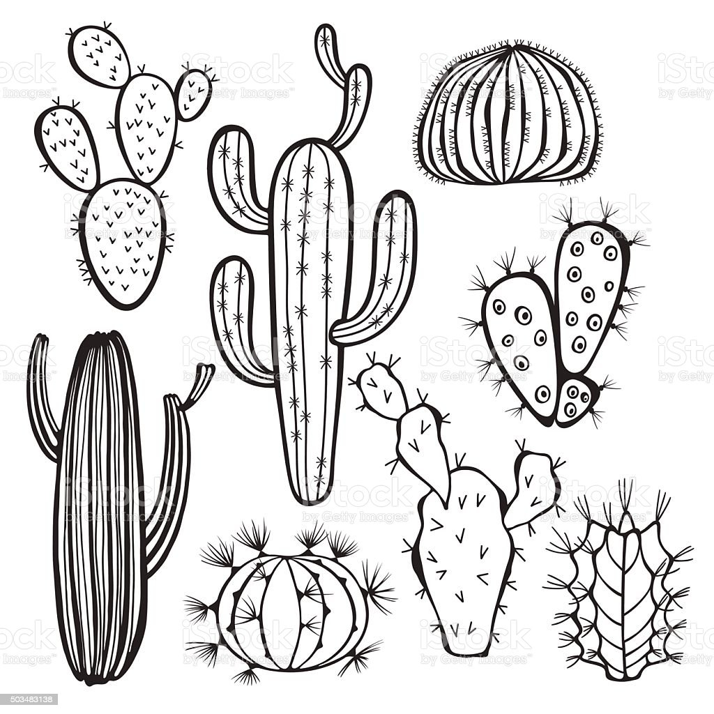 Cactus isolated on white background. Vector,  hand drawn set illustration. vector art illustration