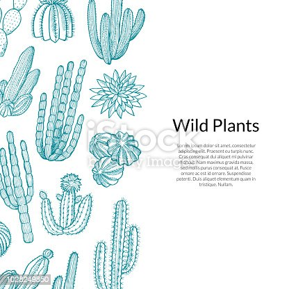 Vector hand drawn wild cacti plants background with place for text illustration
