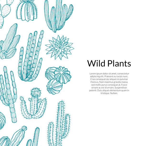 stockillustraties, clipart, cartoons en iconen met cactus patroon. vector hand getekend wild cactussen planten - cactus