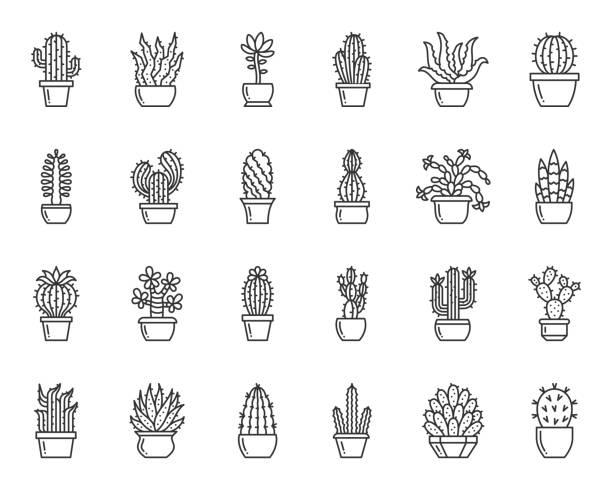 stockillustraties, clipart, cartoons en iconen met cactus plant eenvoudige zwarte lijn iconen vector set - cactus