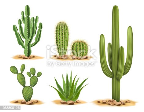 Realistic vector illustration isolated on white background