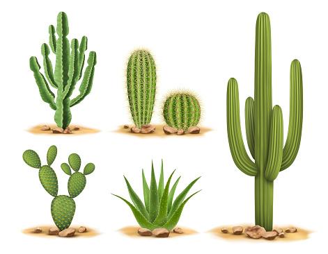 Cactus plants set of desert among sand and rocks