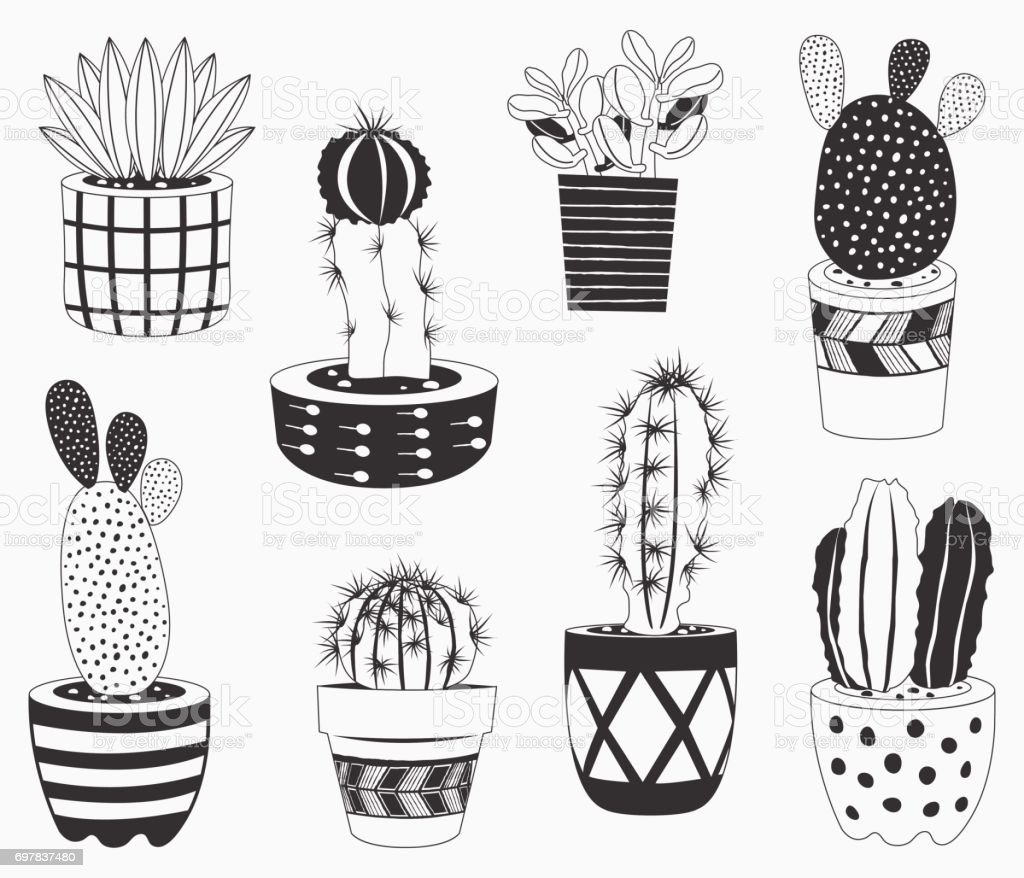 Cactus potted plants collections vector art illustration