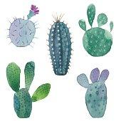Cactus seamless pattern on white background.
