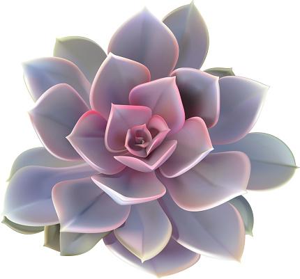 Cactus Succulent Plant - Vector Illustration