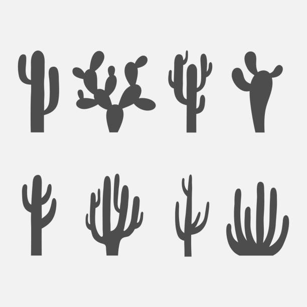 Cactus vector icon set vector art illustration