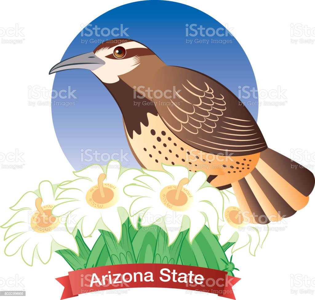 Cactus wren vector art illustration