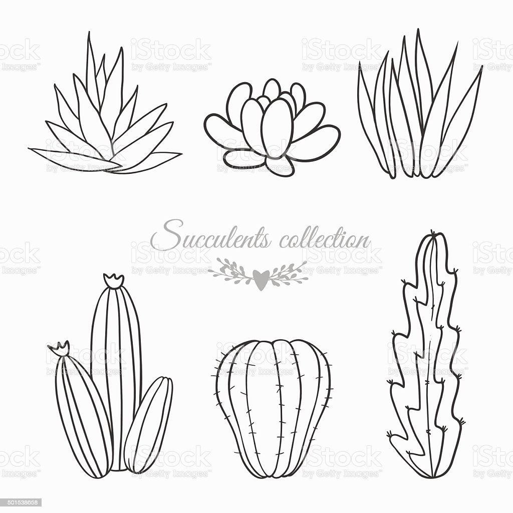 cactuses and succulents, line sketches vector art illustration