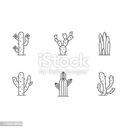 Cactuses pixel perfect linear icons set. American desert plants with fleshy trunks. Family Cactaceae. Customizable thin line contour symbols. Isolated vector outline illustrations. Editable stroke