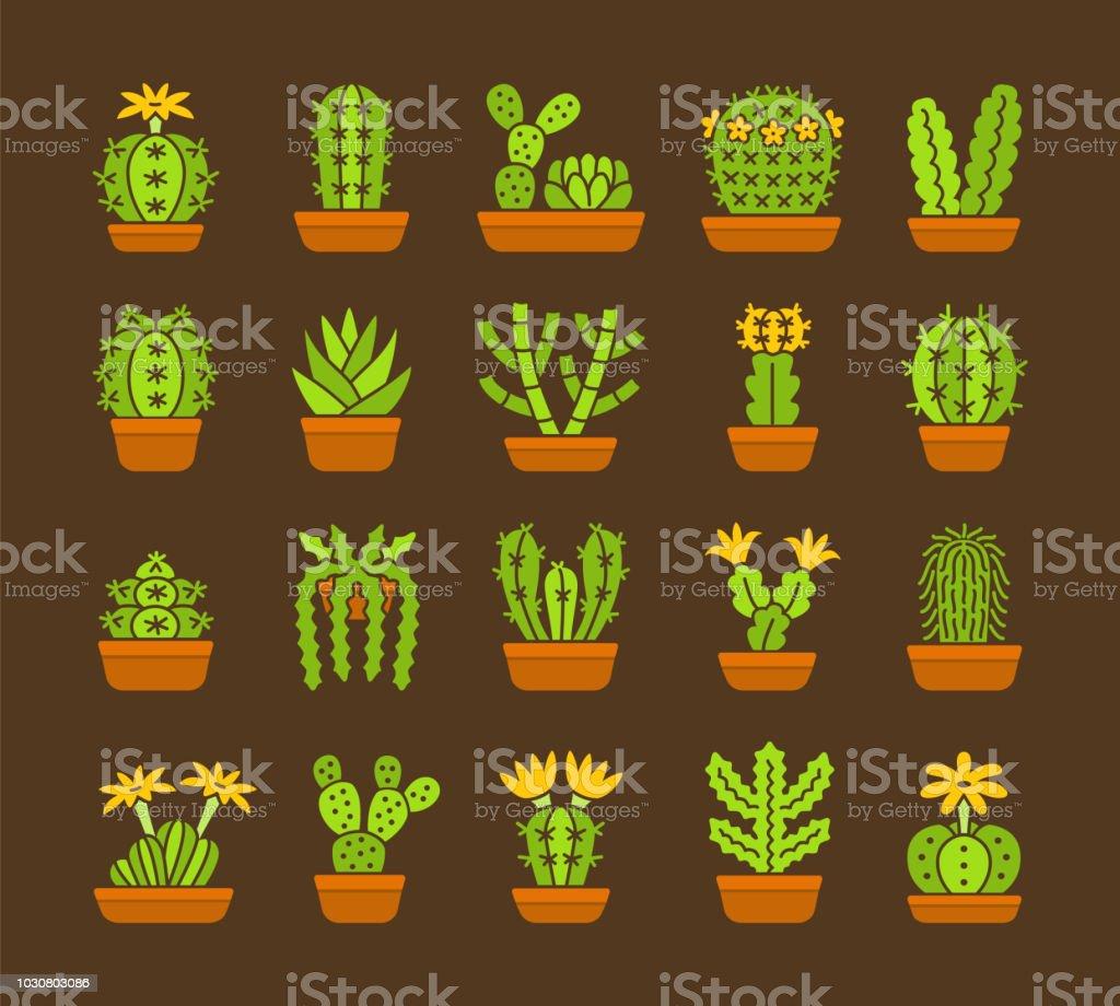 Kakteen Satz Von Wüstenpflanzen Für Terrarien Und Steingärten Flache