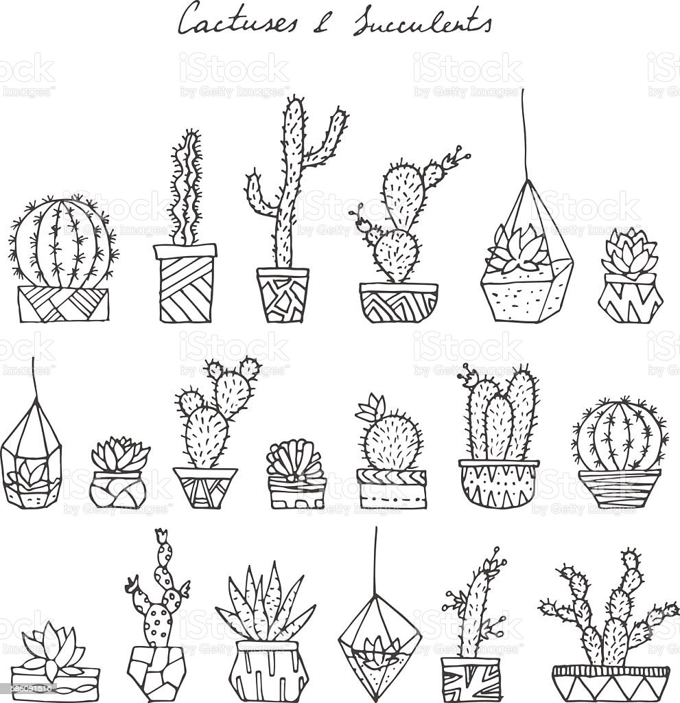 Cactuses, succulents. vector art illustration
