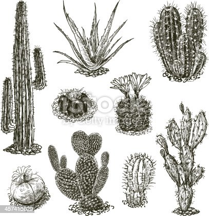 Vector image of the set of the different cactuses.