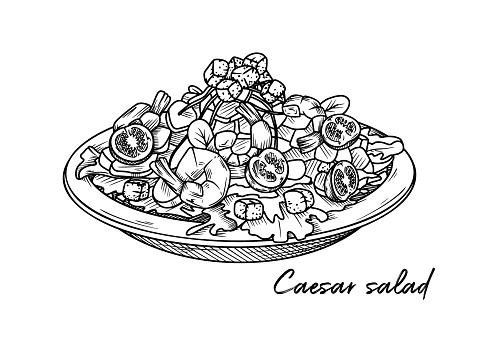 Caesar salad with shrimp isolated on a white background. Sketch Italian dishes. Vector illustration in sketch style.