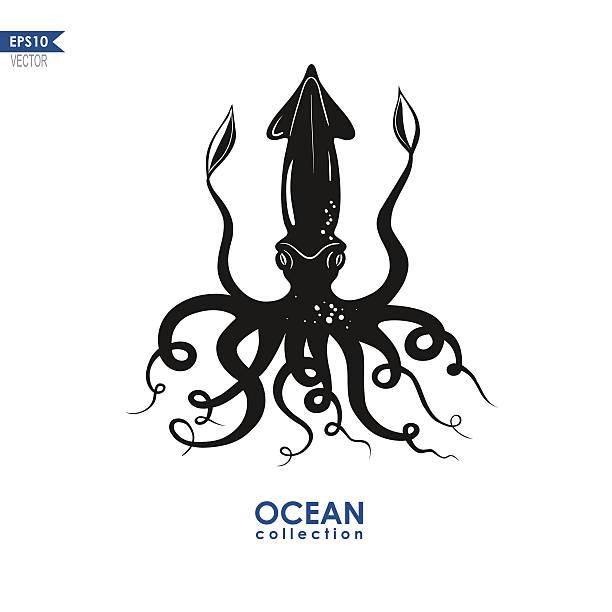 calamari illustrationen - kalamar stock-grafiken, -clipart, -cartoons und -symbole