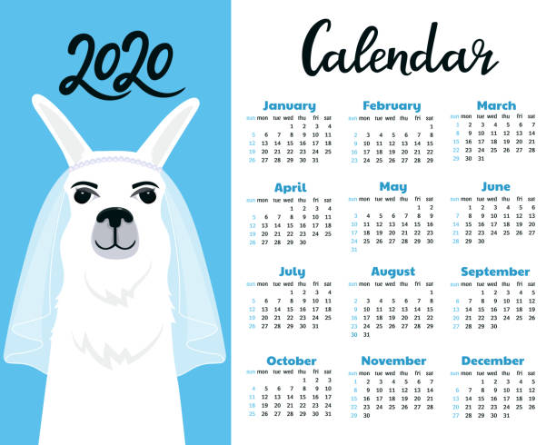 calendar for 2020 from sunday to saturday. cute llama bride in veil. alpaca fiancee cartoon character. funny animal. - wildlife calendar stock illustrations, clip art, cartoons, & icons