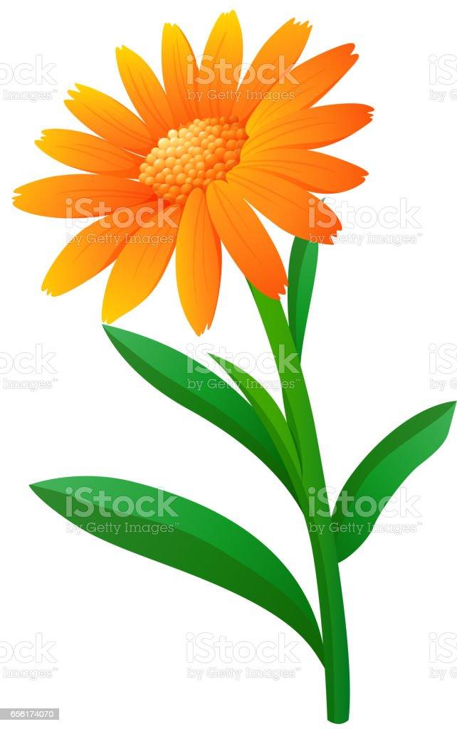 royalty free clip art of a marigold flower clip art vector images rh istockphoto com marigold clipart