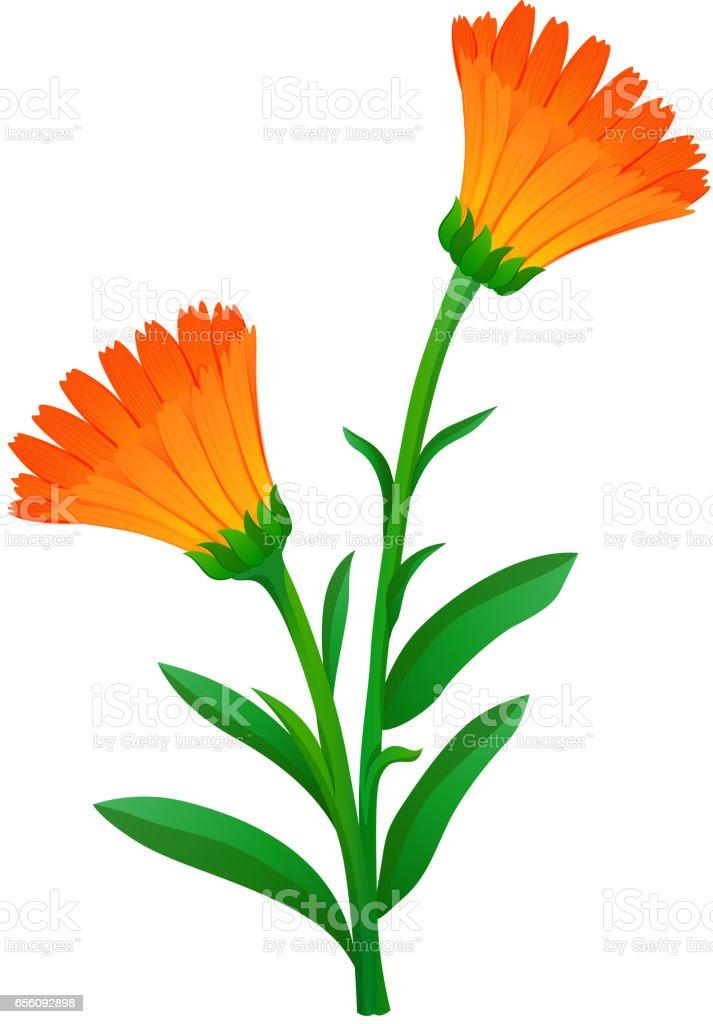 royalty free clip art of a marigold flower clip art vector images rh istockphoto com marigold clipart free marigold clipart black and white