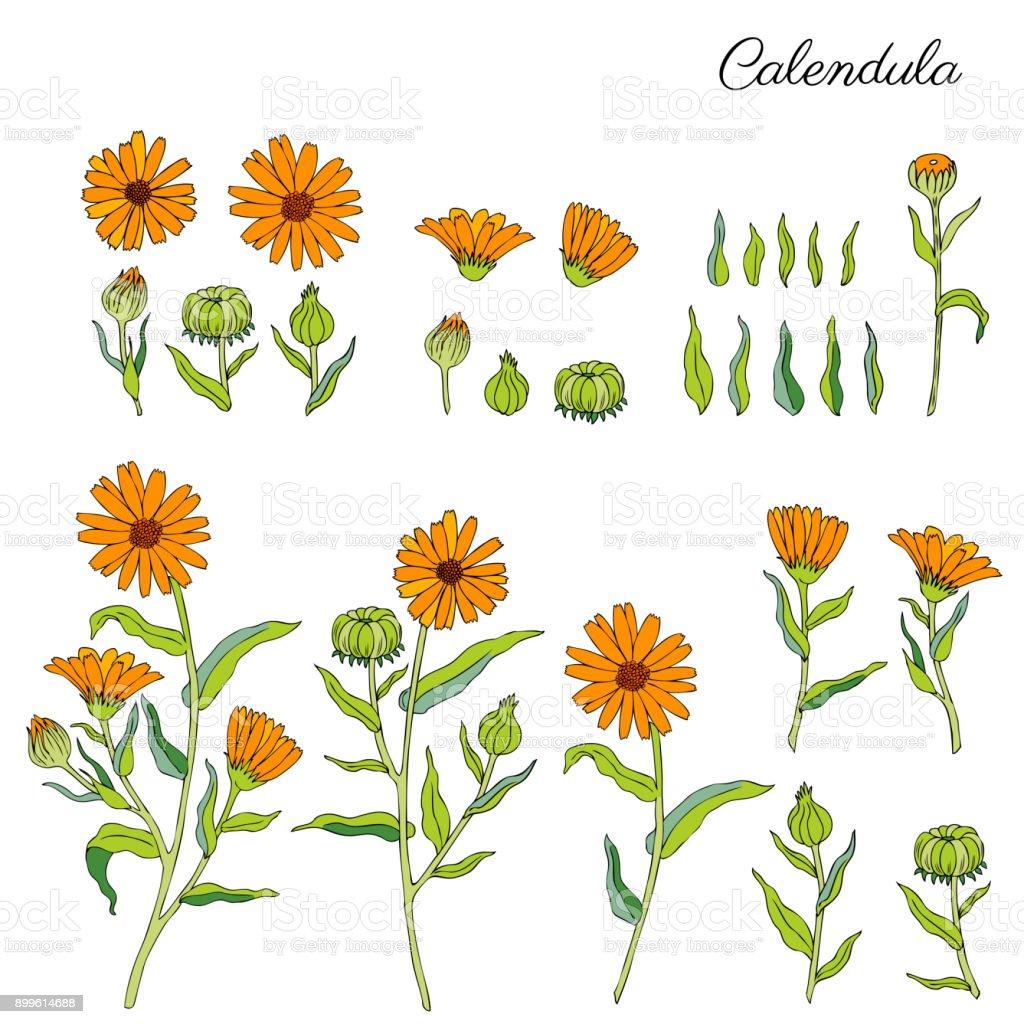 Botanical Vector