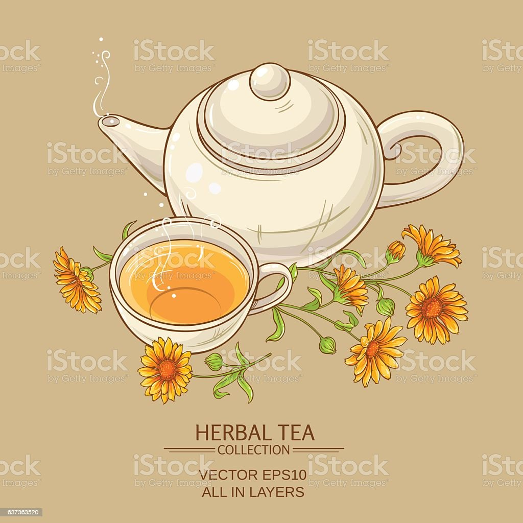 calendula tea  vector illustration vector art illustration