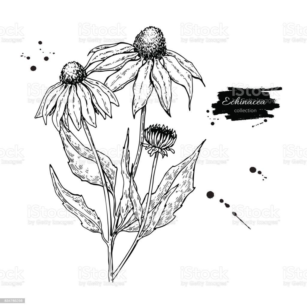 Hemorrhage Clip Art, Vector Images & Illustrations - iStock Calendula Flower Drawing
