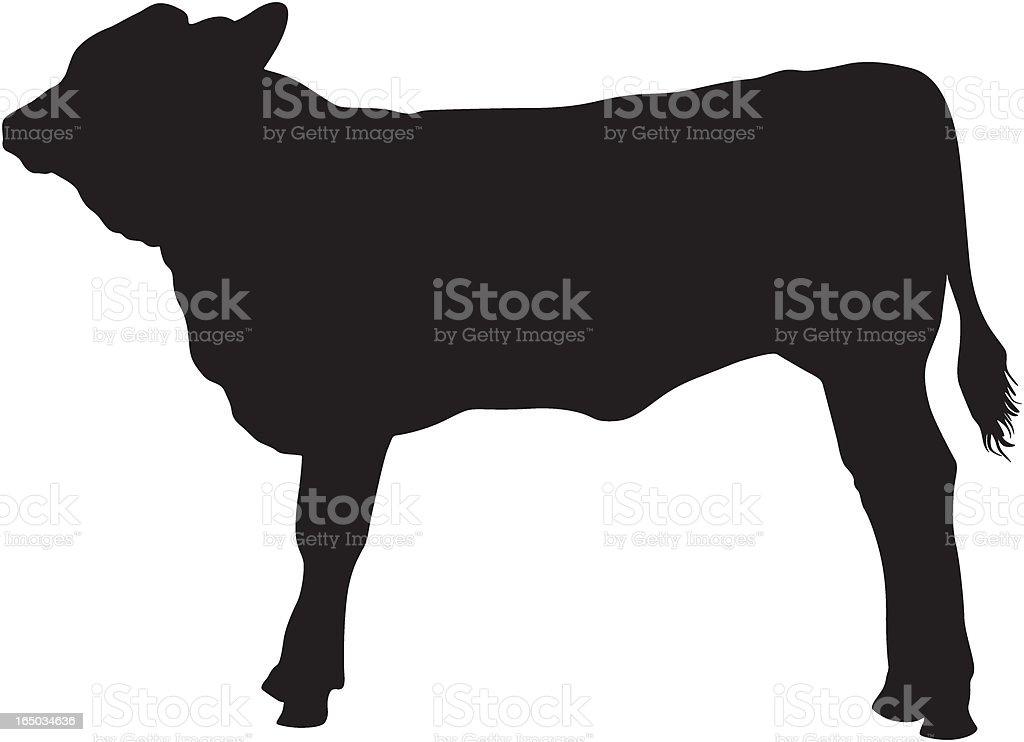 Calf (vector) vector art illustration