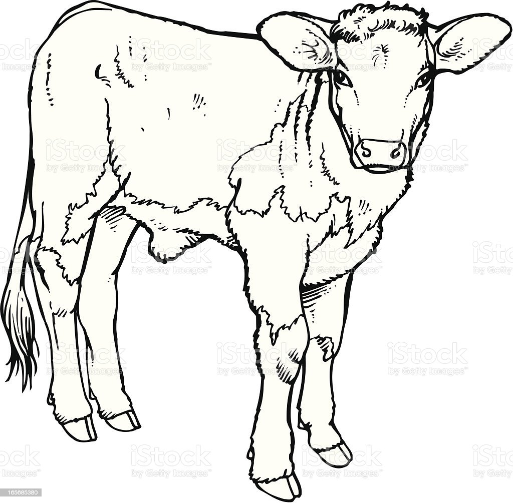 Calf vector art illustration