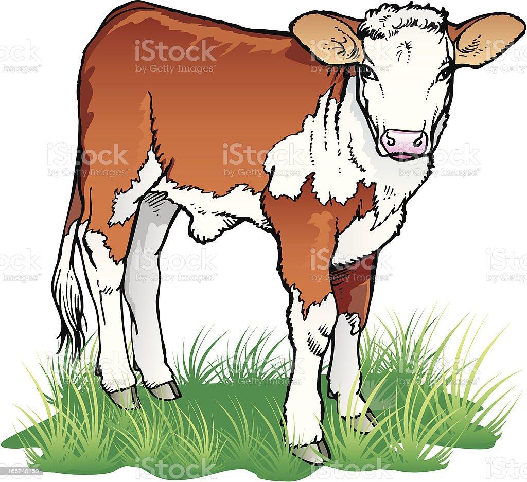 Calf vector art illustration