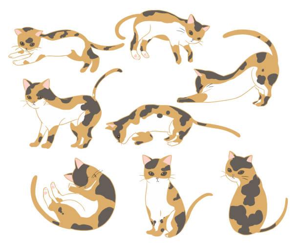 カリコ猫 ベクターアートイラスト