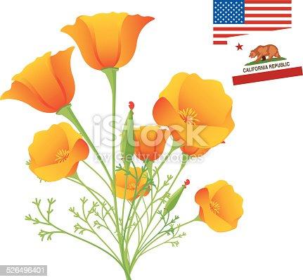 Vector California Golden Poppy