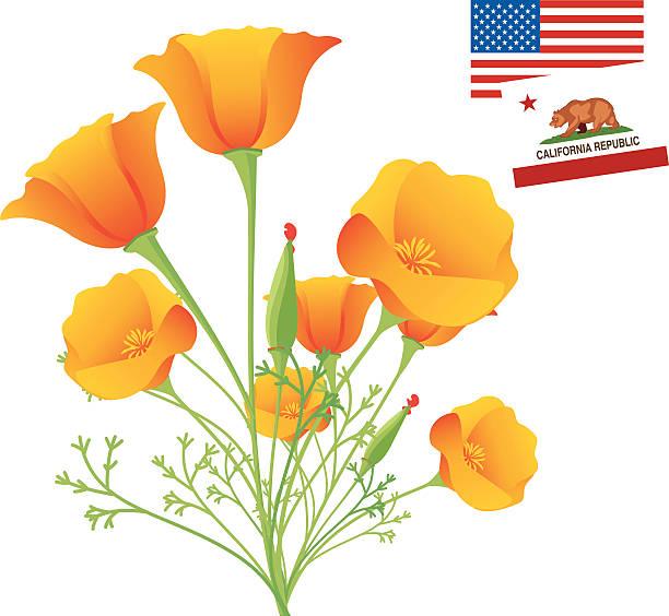 Royalty free california poppies clip art vector images california golden poppy vector art illustration mightylinksfo