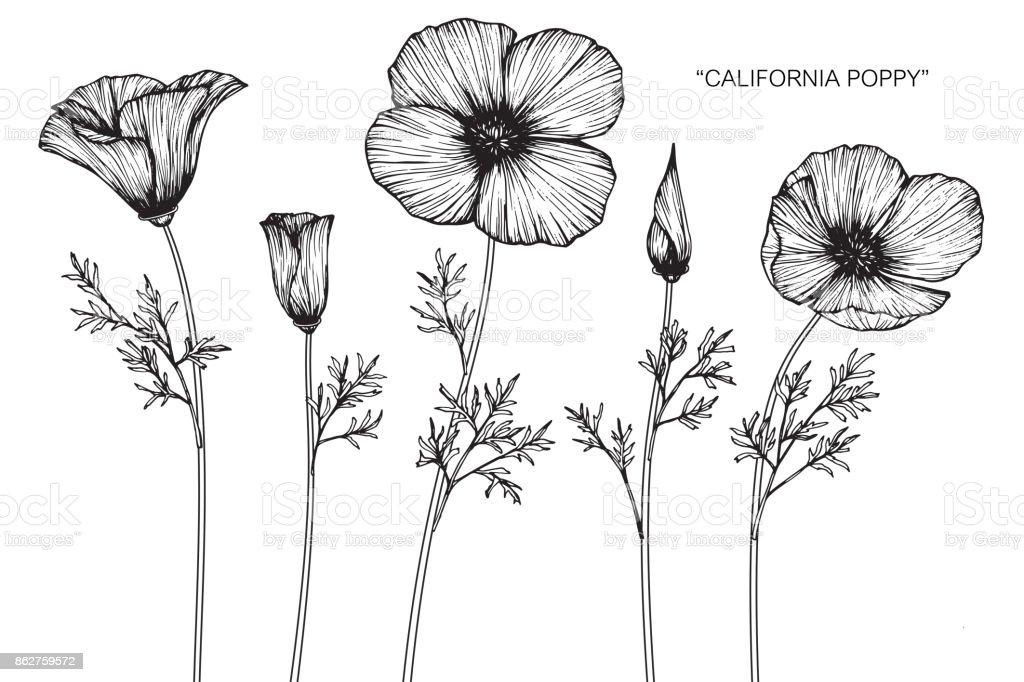 Poppy flower outline clip art 1 clip art vector site california poppy flower drawing stock vector art more images of rh istockphoto com spring flowers clip art spring flowers clip art mightylinksfo