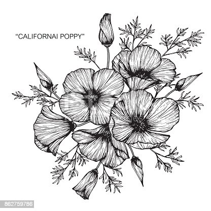 Hand drawing and sketch California poppy flower. Black and white with line art illustration