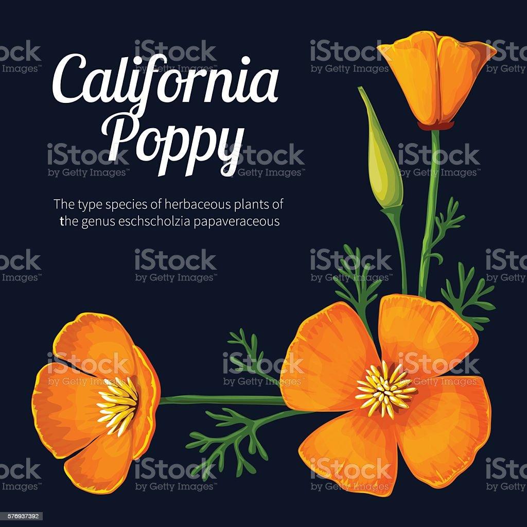 California Poppy vector art illustration